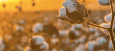 6 redenen om te kiezen voor bio-katoen
